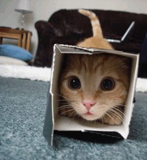 cat-in-a-box01-1