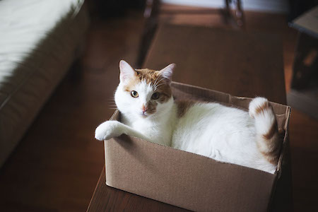 cat-in-a-box04-1