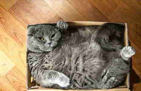 cat-in-a-box10-1